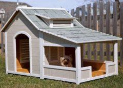 Будинок для собаки – затишне житло для кімнатного улюбленця